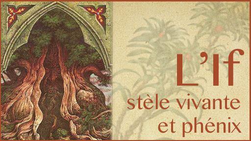 L'If, stèle vivante et phénix