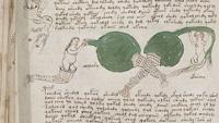 malet manuscrit voynich 4