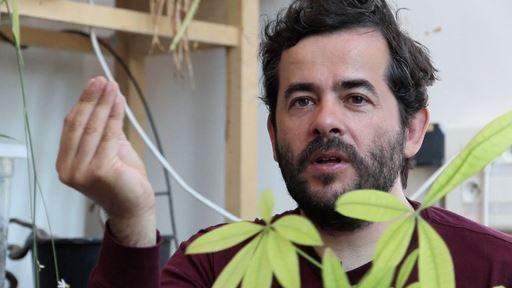 De l'intelligence des plantes